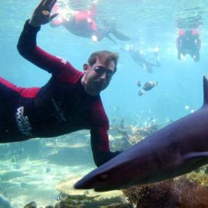 Andrew Baildon Superfish swim with Sharks